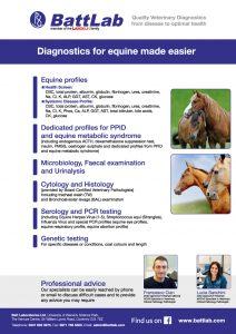 equine_flyer_a4_2020
