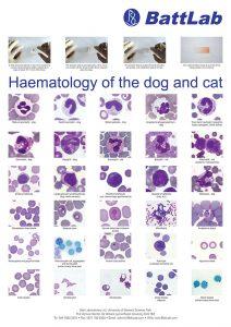 haematology_poster